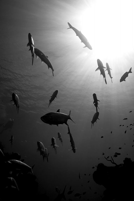 Fish photographed in black and white