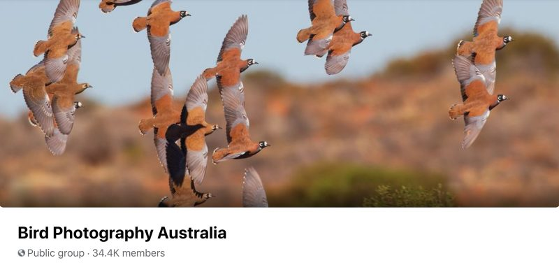 Bird Photography Australia