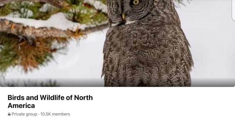 Birds and Wildlife of North America
