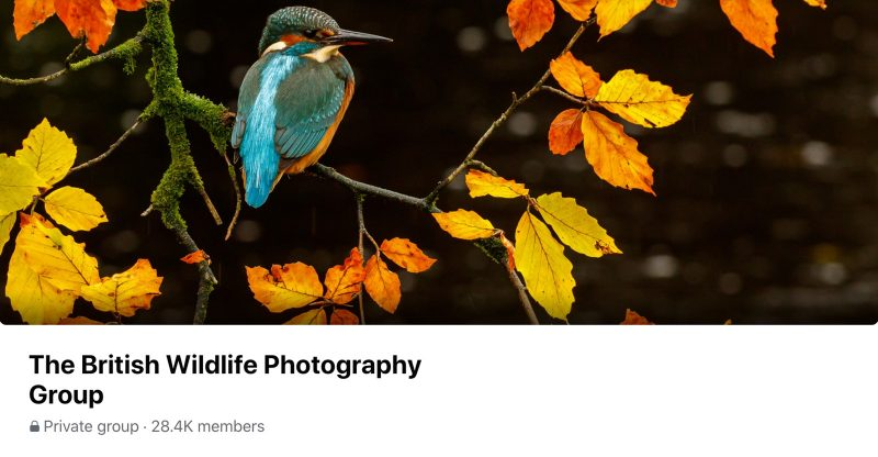 The British Wildlife Photography Group