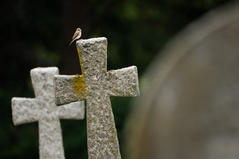 Bird on headstone