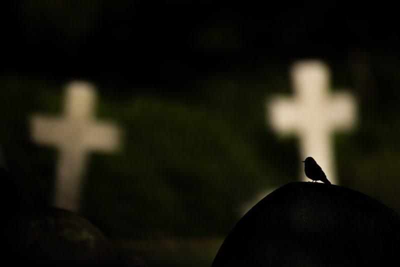 Bird silhouette churchyard