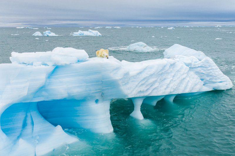 Polar bear resting on iceberg