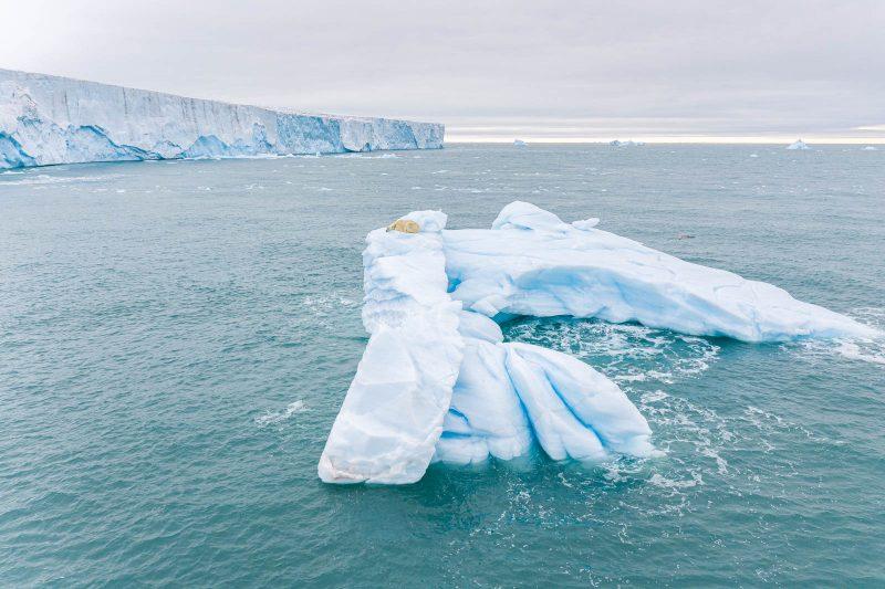 Polar bear sleeping on iceberg