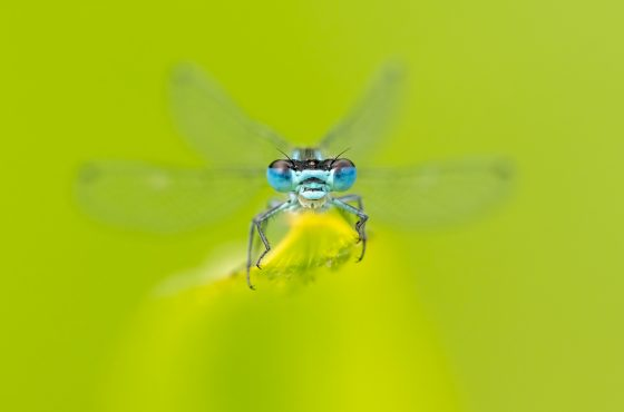common-macro-photography-mistakes-you-should-avoid-12