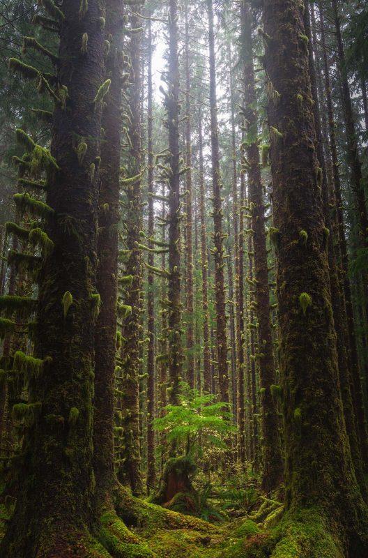 Portrait landscape of trees