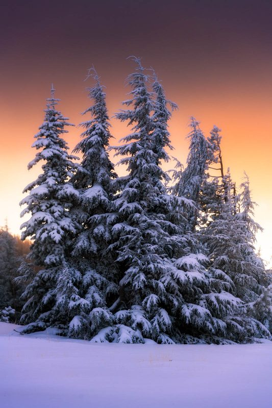 Edited landscape of snowy trees