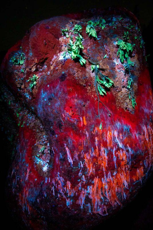 UV rock and seaweed