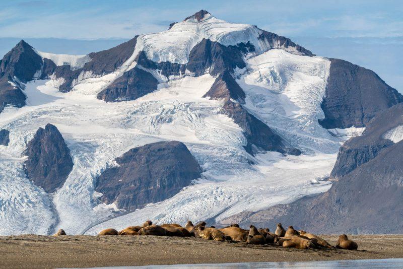 Arctic wildlife landscape