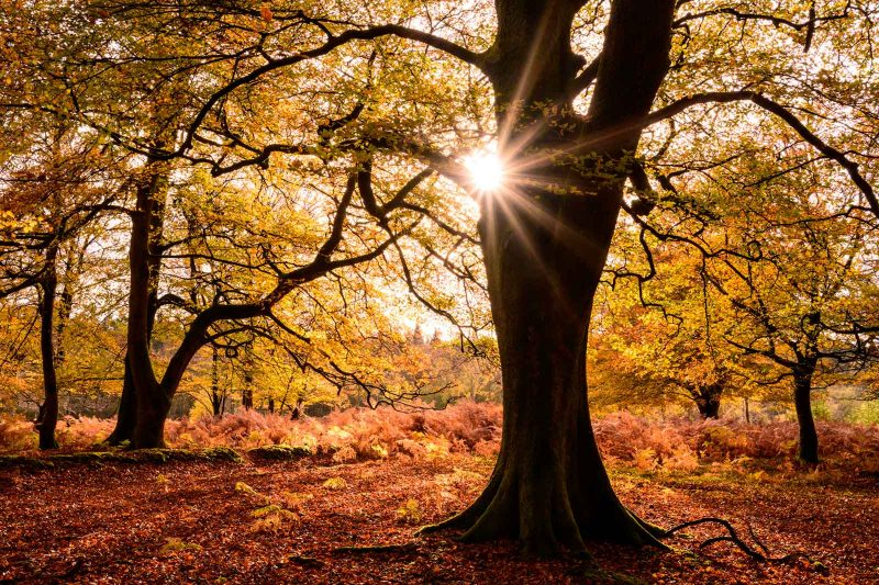 Backlit woodland with a starburst