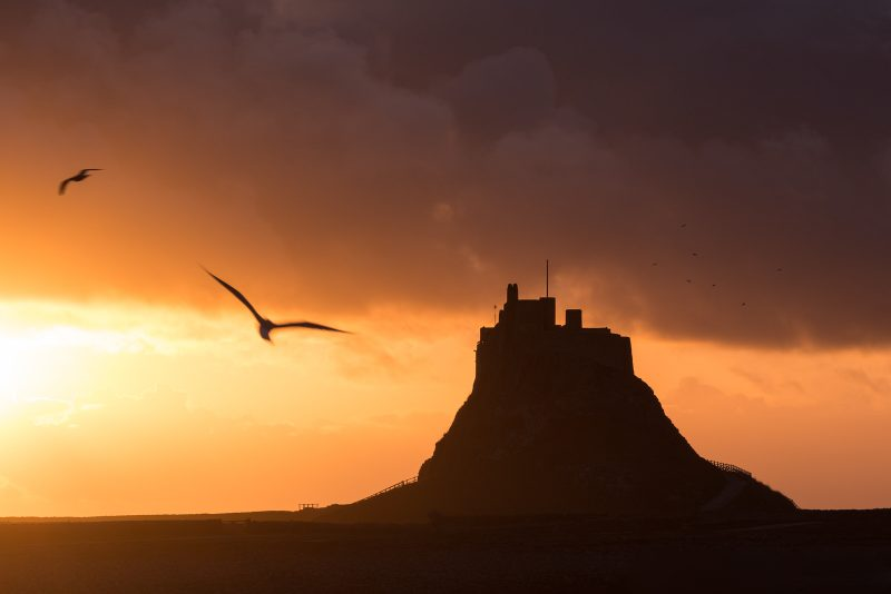 Silhouette of gulls and St Michael's mount