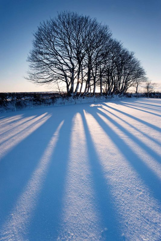 Backlit trees with shadow on the snow