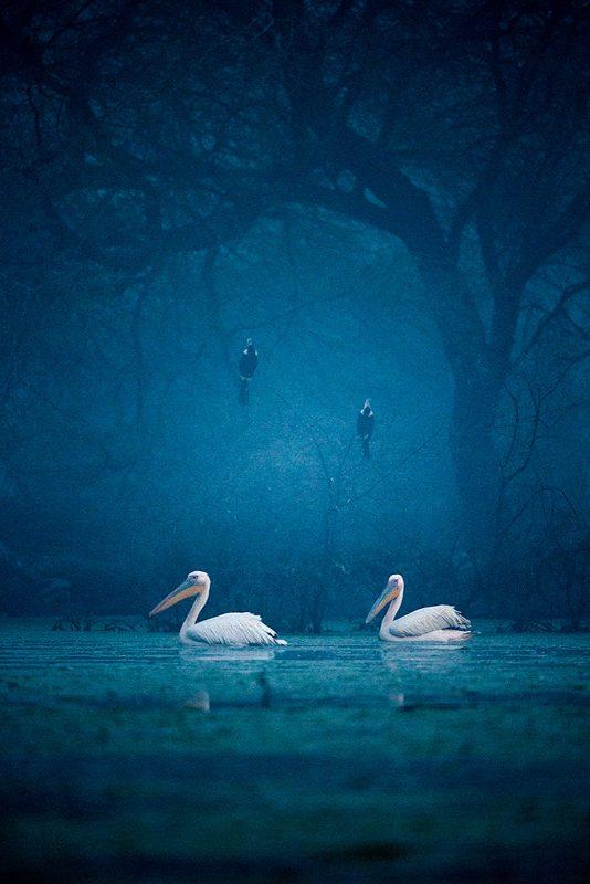 Bird photography by Sudhir Shivaram