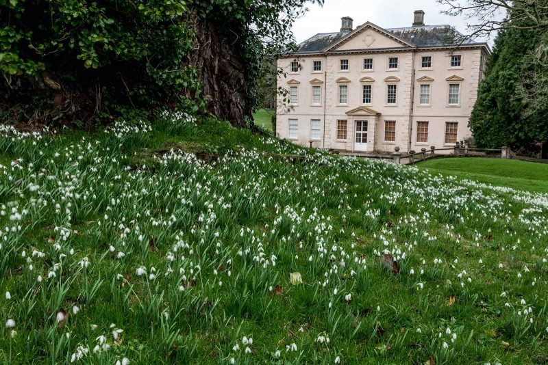 Snowdrops at Pencarrow House in Cornwall