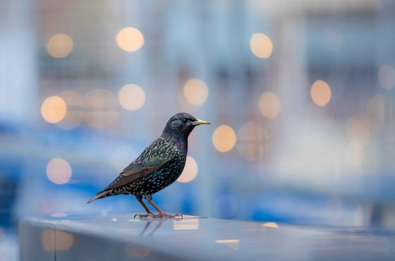 How to take Creative Urban Wildlife Photos_-17