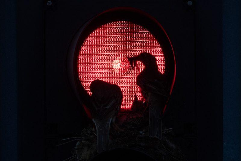 Bird nest in a traffic light