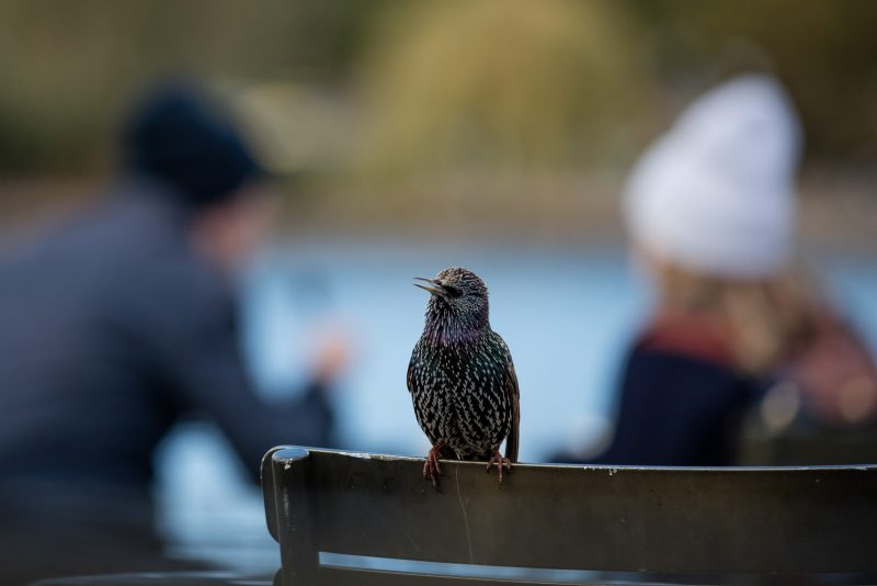 People in a park and a starling