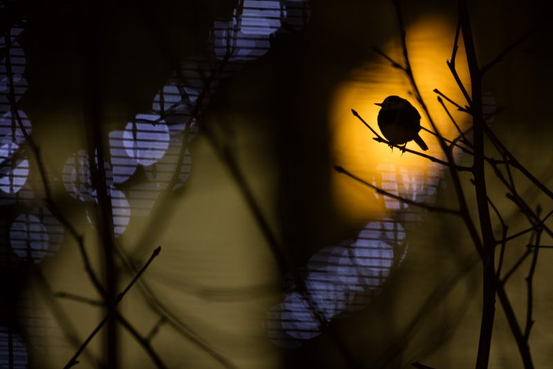 Urban bird photography