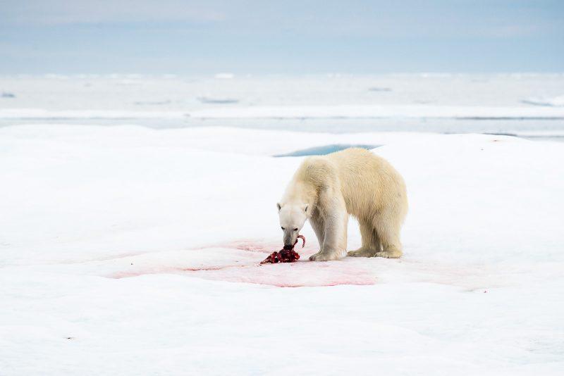 Photograph arctic wildlife