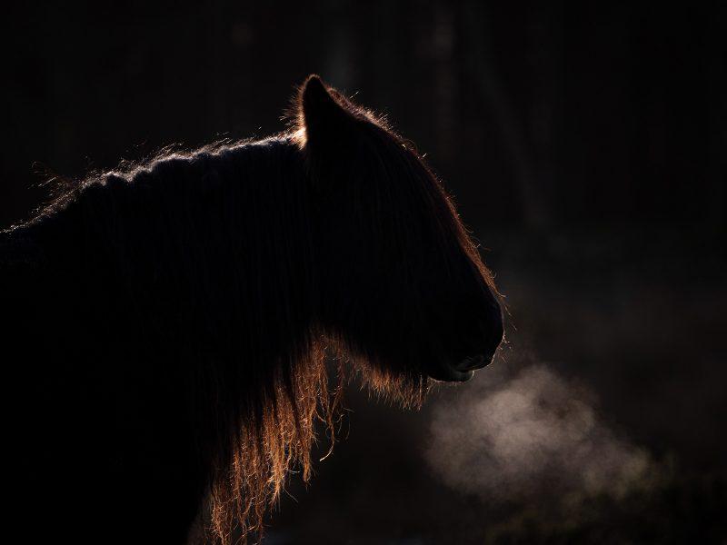 Backlit Wild pony