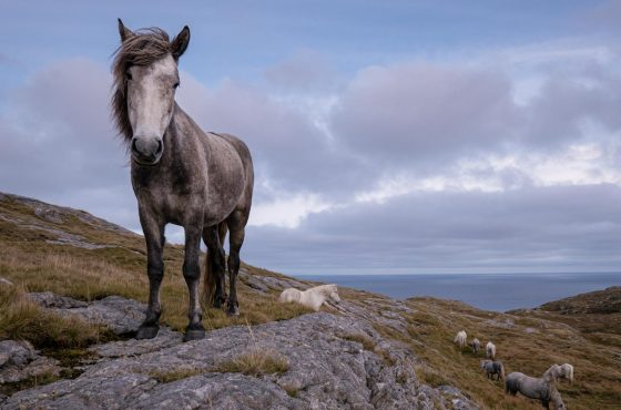 How to Photograph Wild Ponies in the UK-4