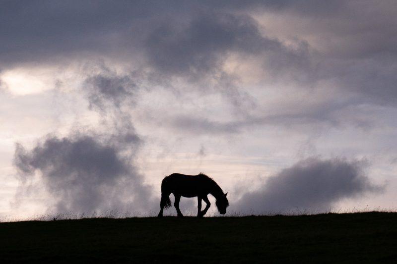 Wild pony silhouette