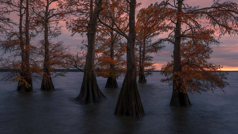 Trees growing in a lake