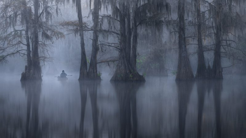 Atmospheric tree photograph
