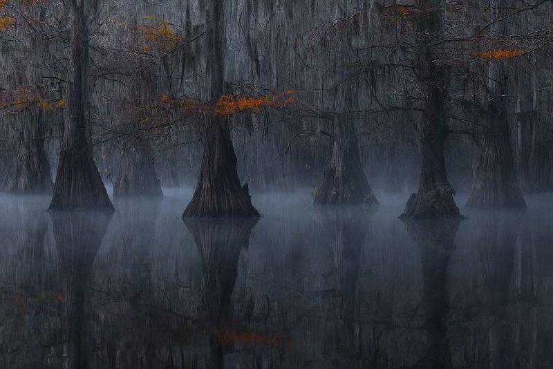 atmospheric tree landscape