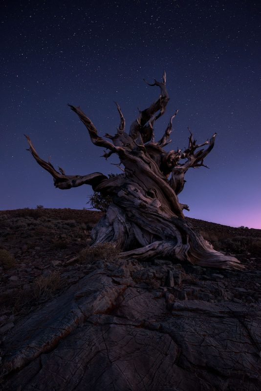 Tree photography at night