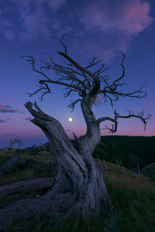 single tree at night