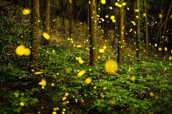 how-to-photograph-fireflies-11