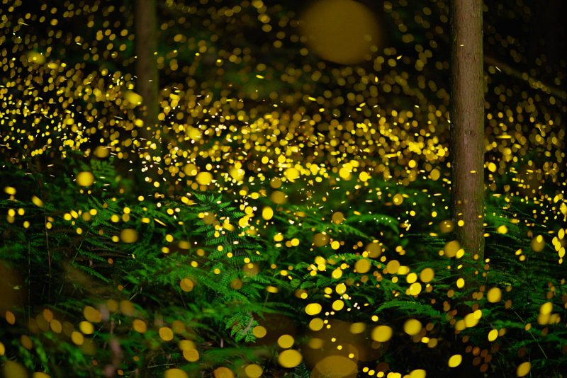 Too many fireflies in the image