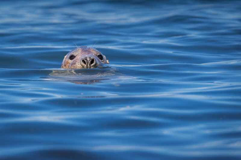 Seal in Wales