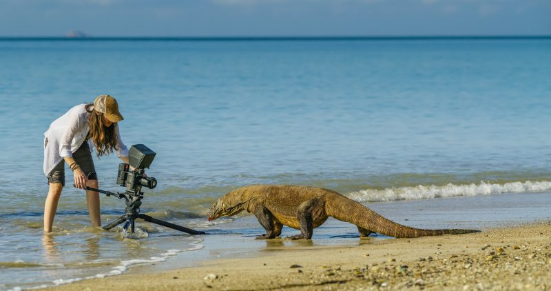 Shannon Wild photographing a komodo dragon