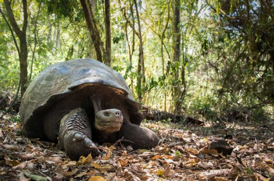 How to Photograph Wildlife in the Galapagos_-3