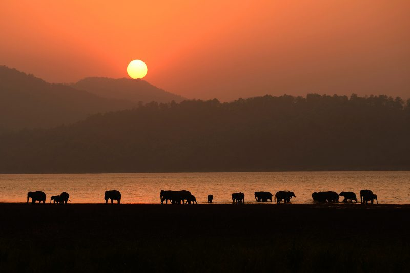 Elephant at sunset in India