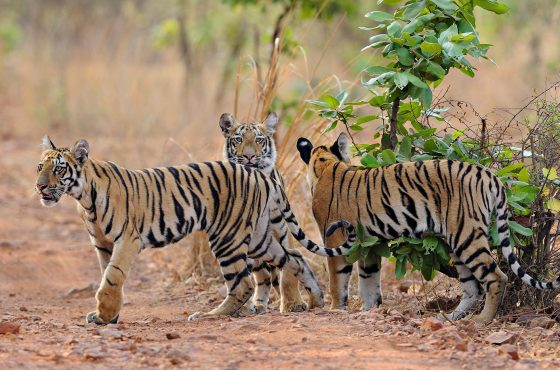 Where to Photograph Wildlife in India