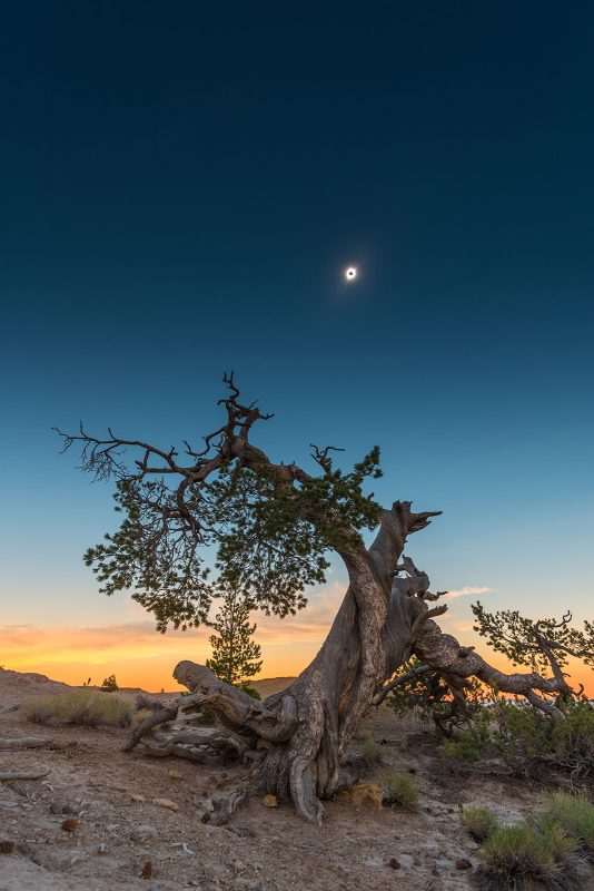Solar eclipse tree in foreground