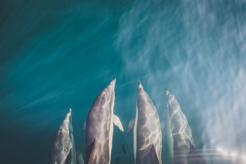 Dolphins photographed from above