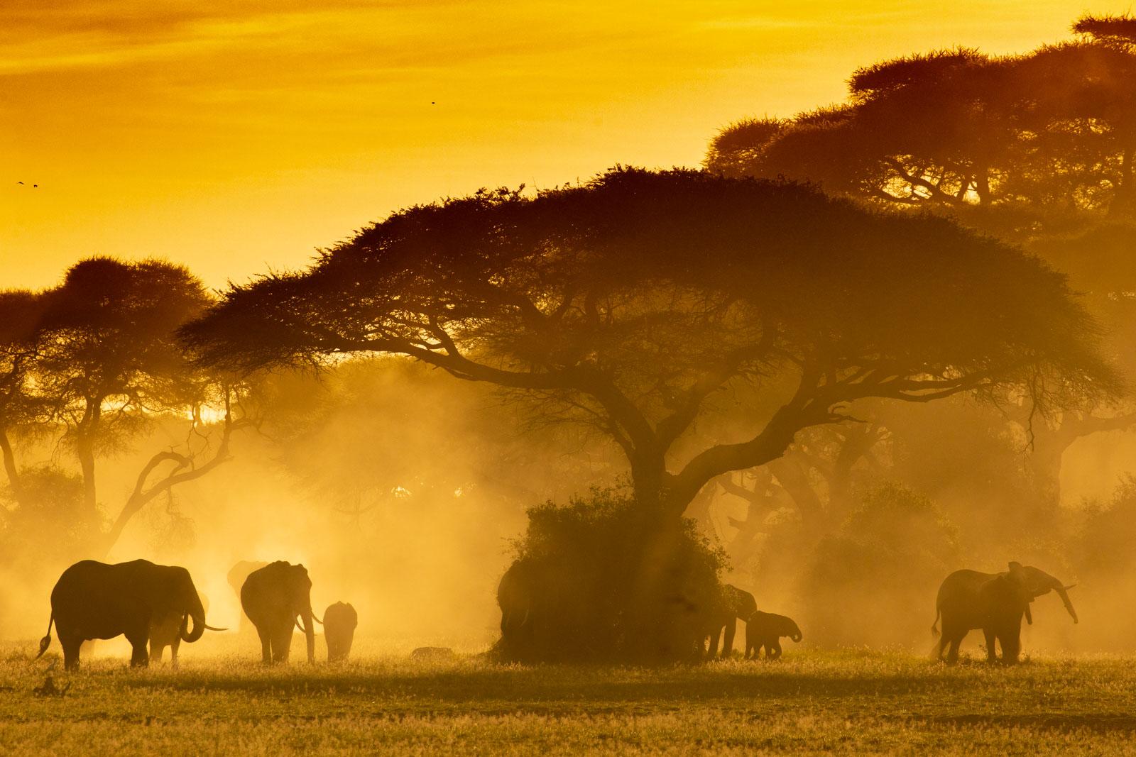 Elephants backlit