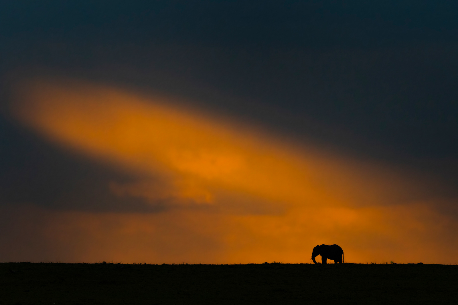 Elephant in african landscape