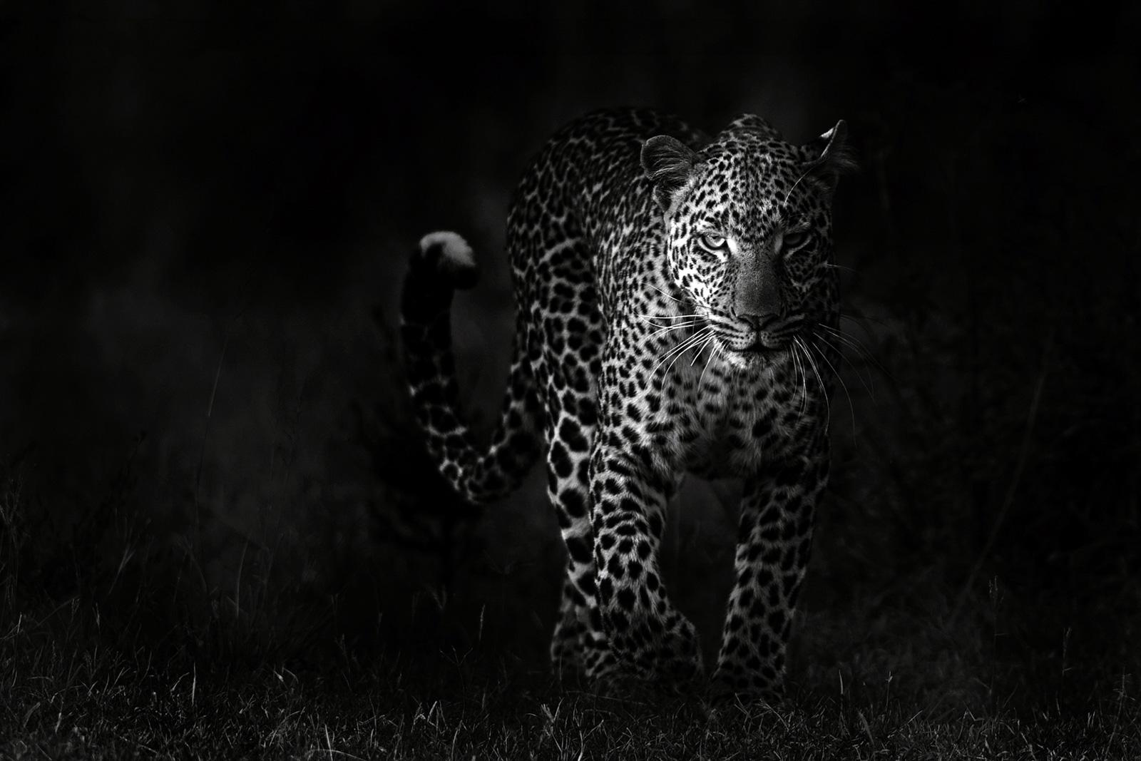 Underexposed leopard photo