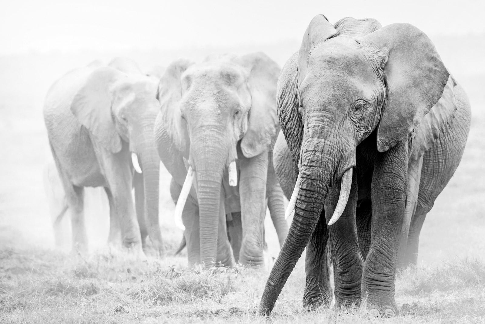 Over exposed elephants for a creative safari photo