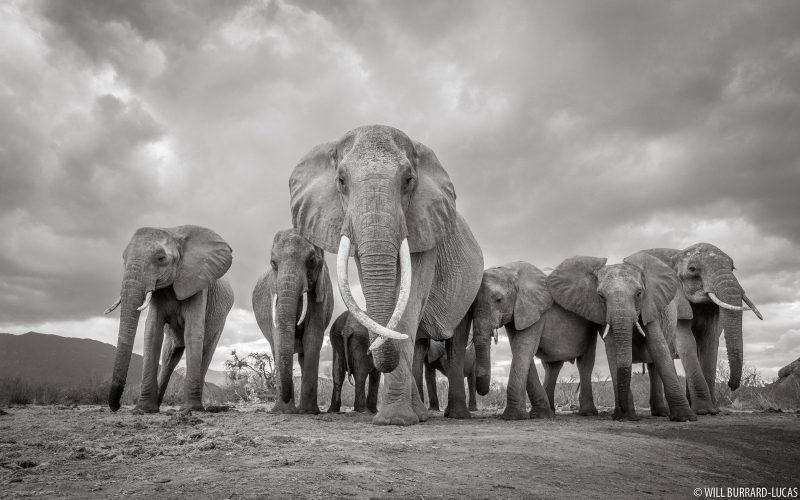 Black and white elephant photo