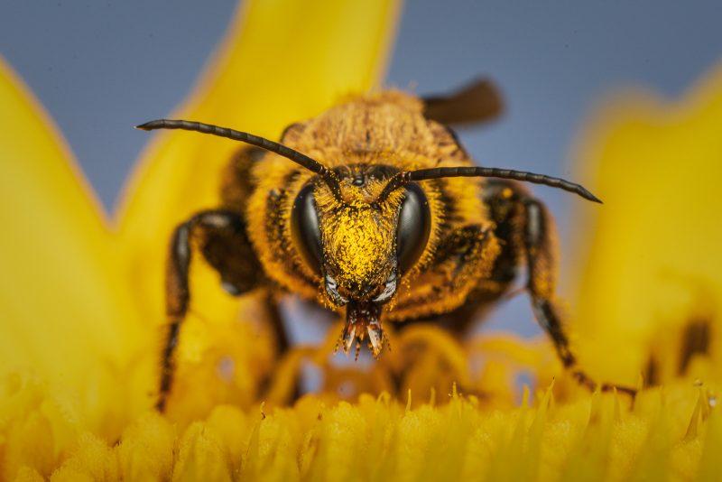 Bee feeding on flower, close up