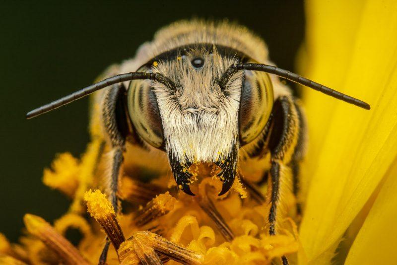 Bee feeding in macro