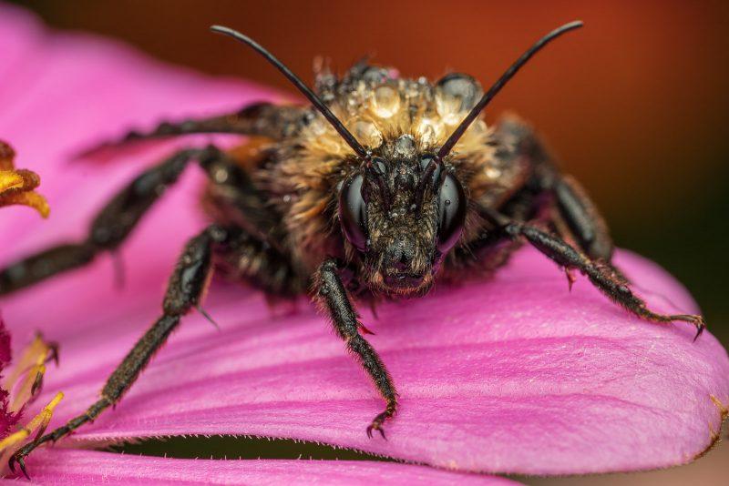 Raindrop covered bee