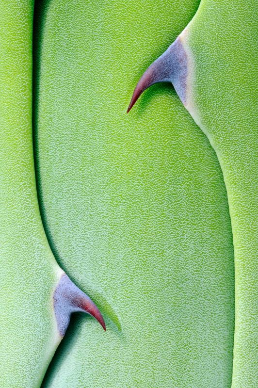 Close up of plant