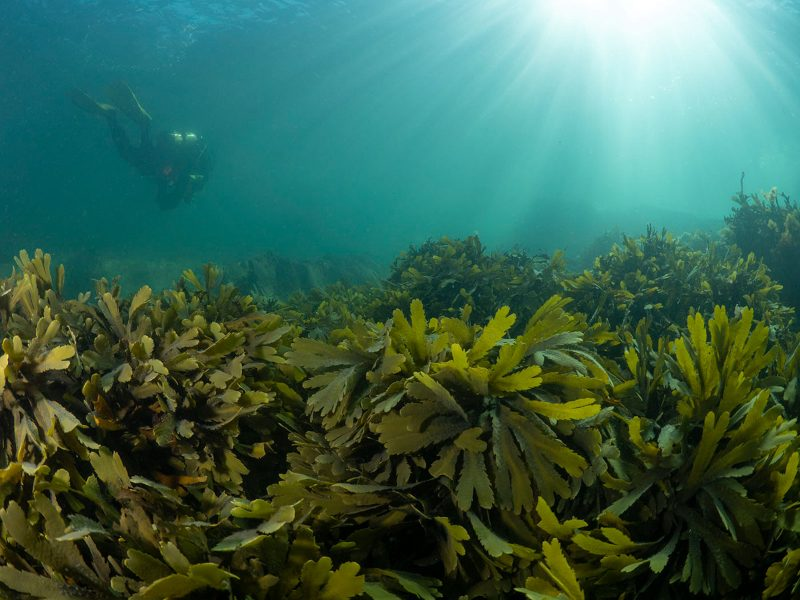 Seaweed in shallows